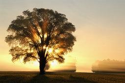 162365__morning-dawn-sun-light-rays-tree-trees-field_t