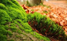 COIFR : coiffeur bio végétal.: Un jardin de couleurs pour vous faire ...